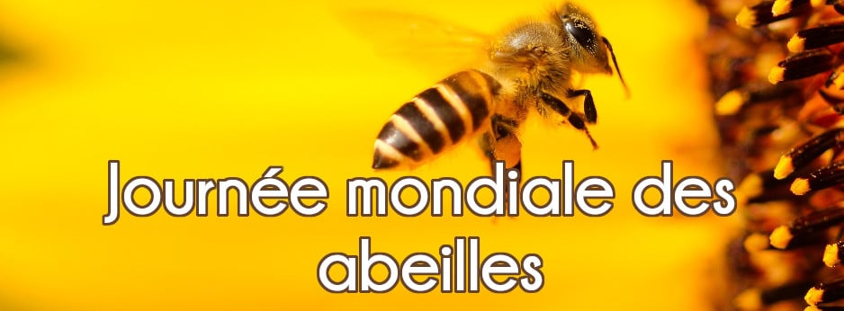 JM-Hab-0520-abeilles.V2